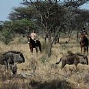 Safari i Namibia